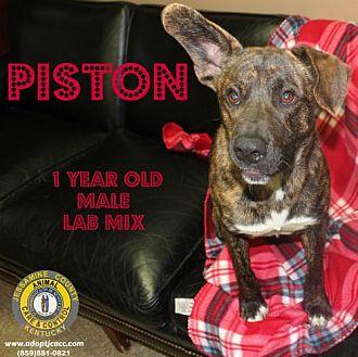 Adopt A Pet :: Piston  - Nicholasville, KY