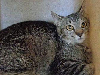 Adopt A Pet :: 18-0301  - Laramie, WY