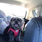 Adopt A Pet :: Macy (OS)