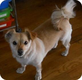 Dewey Az Jack Russell Terrier Meet Micah A Pet For Adoption