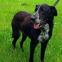 Adopt A Pet :: Abel - N - Huntington, NY