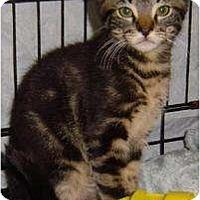 Adopt A Pet :: Felix - Sherman Oaks, CA