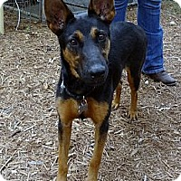 Adopt A Pet :: DORA / GUINNESS - SAN ANTONIO, TX