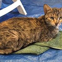 Adopt A Pet :: Jewel - Agoura Hills, CA
