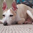 Adopt A Pet :: Andy - HOSPICE HOME