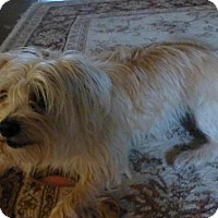 Adopt A Pet :: Bubbles - Sacramento, CA