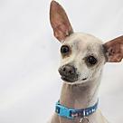 Adopt A Pet :: Chachki