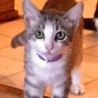 Adopt A Pet :: Tisha - Fort Worth, TX