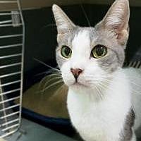 Adopt A Pet :: Bella - Odessa, FL