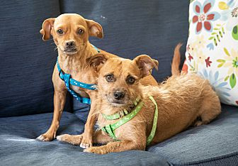 Adopt A Pet :: Saving Cee Cee and Michey  - Ft Myers Beach, FL