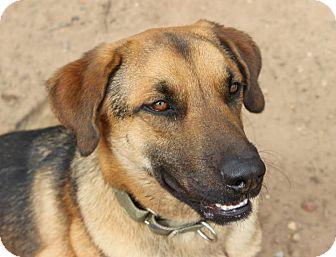 German Shepherd Dog Mix Dog for adoption in Vancouver, British Columbia - Travis