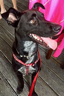 Adopt A Pet :: HANDSOME AND TOTALLY COOL  - Ft Myers Beach, FL