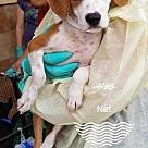 Adopt A Pet :: Net