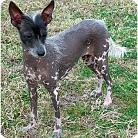 Adopt A Pet :: Ella - Whitewright, TX