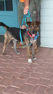 Shepherd (Unknown Type) Mix Dog for adoption in Golsboro, North Carolina - COLT