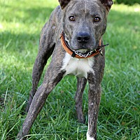 Adopt A Pet :: Gumby - Waldorf, MD