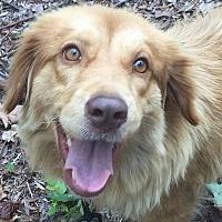 Adopt A Pet :: Carmen - CUMMING, GA