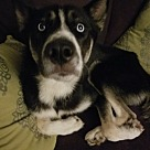 Adopt A Pet :: Esmeralda