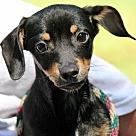 Adopt A Pet :: Derek B