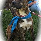 Adopt A Pet :: Cayenne