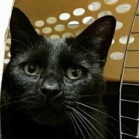 Adopt A Pet :: BLAIRE - Rogers, AR