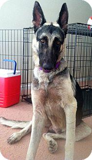 German Shepherd Dog Mix Dog for adoption in Phoenix, Arizona - Magic