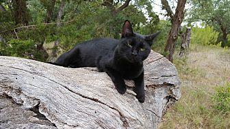 Adopt A Pet :: Miranda  - Fischer, TX