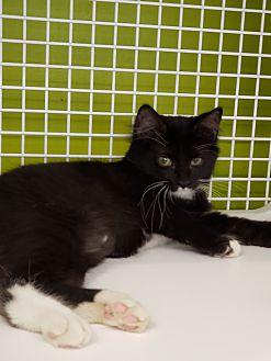Adopt A Pet :: sara  - millville, NJ