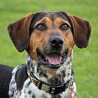 Adopt A Pet :: Nebert - Chino Hills - Chino Hills, CA