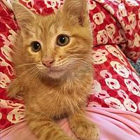 Adopt A Pet :: Skipper - Butner, NC
