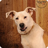 Adopt A Pet :: Burt - Coventry, RI