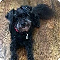 Adopt A Pet :: Tess - Atlanta, GA