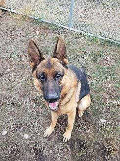 Montana German Shepherd Rescue | Hamilton, MT 59840