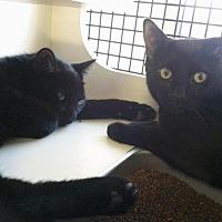 Adopt A Pet :: Teddy & Hershey - Cranford, NJ