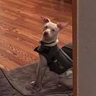 Adopt A Pet :: Keller