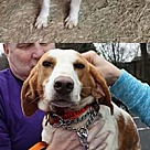 Adopt A Pet :: Brooke