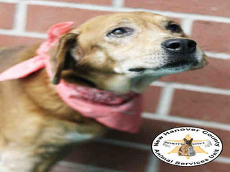 Adopt A Pet :: REMY  - Wilmington, NC