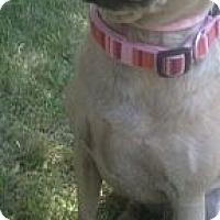 Adopt A Pet :: Emma - West Hills, CA