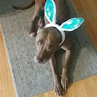 Adopt A Pet :: Cupcake (COURTESY POST) - Baltimore, MD