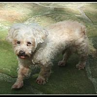 Adopt A Pet :: Martin (FL) - Chattanooga, TN