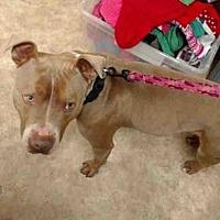 Adopt A Pet :: TROY - Paradise, CA