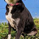 Adopt A Pet :: Ida
