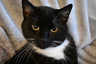 Adopt A Pet :: Keiran  - Concord, NC