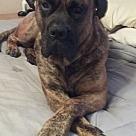 Adopt A Pet :: Gideon