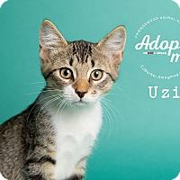 Adopt A Pet :: Uzi - Friendswood, TX