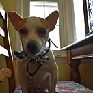 Adopt A Pet :: Wishbone