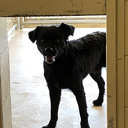 Miami County Animal Shelter in Troy, Ohio