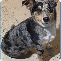 Adopt A Pet :: Miss Pixie - Minneapolis, MN