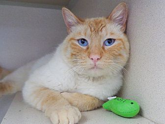 Adopt A Pet :: Caruso  - Laramie, WY