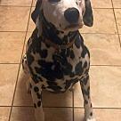 Adopt A Pet :: XP Nashville